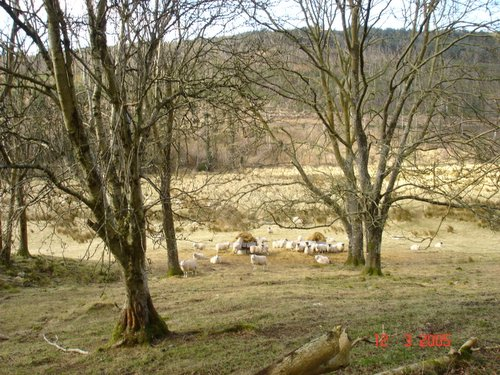 photograph of countryside before using picasa, © www.BreastFeedingMums.com