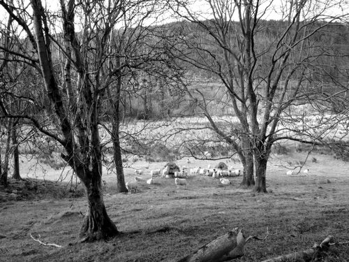 photograph of countryside after using picasa, © www.BreastFeedingMums.com